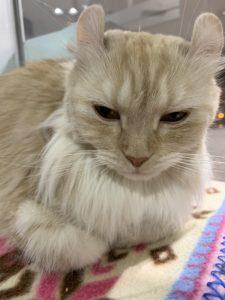 気品漂う猫