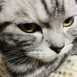 2020年2月22日猫の日!猫の香箱座りの疑問?あんよ痛くないの?