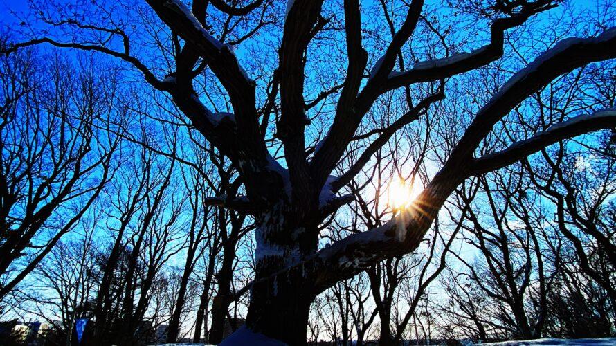 【パワースポット巡り】札幌の樹齢300年以上の御神木が鎮座する神社♪